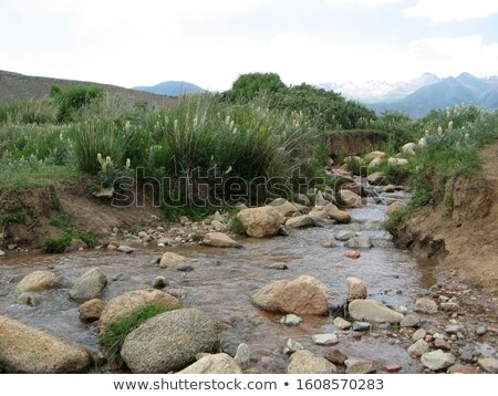 Streaming river with stones and sedge in the background Stock photo © Mps197