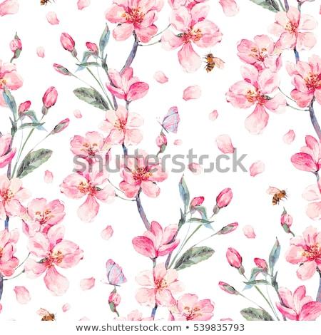 Borboletas cereja pêssego flor flores flor de cereja Foto stock © Krisdog