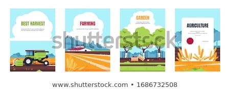 agrícola · maquinaria · conjunto · desenho · animado · vetor · bandeira - foto stock © robuart