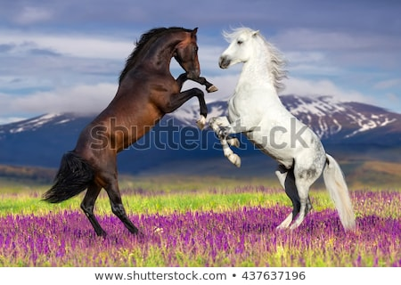 ló · testtartás · hegyek · Grúzia · szürke · ősz - stock fotó © kotenko