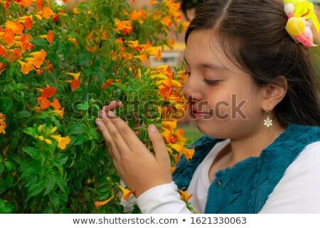 Jovem criança flores silvestres jovem Kansas flores Foto stock © danahann