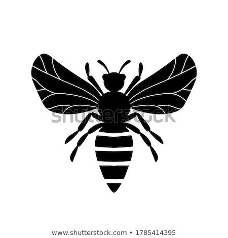 насекомые иконки шаблон дизайна прибыль на акцию 10 Сток-фото © netkov1
