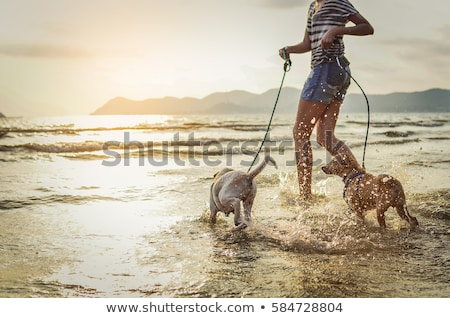 woman running with dog on leash pet and owner stockfoto © robuart