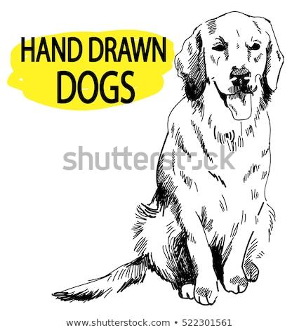 Labrador retriever kutyafajta rajz retro rajz stílus Stock fotó © patrimonio