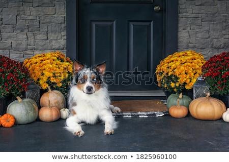 Elöl veranda díszített hálaadás nap házi készítésű Stock fotó © StephanieFrey