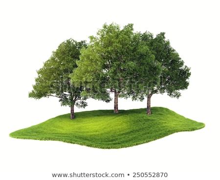 eco house on white background. Isolated 3D illustration Stock photo © ISerg