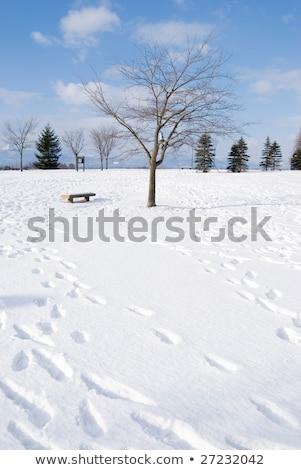 Lábnyom hó kopasz fa kifejezéstelen szék Stock fotó © Ansonstock
