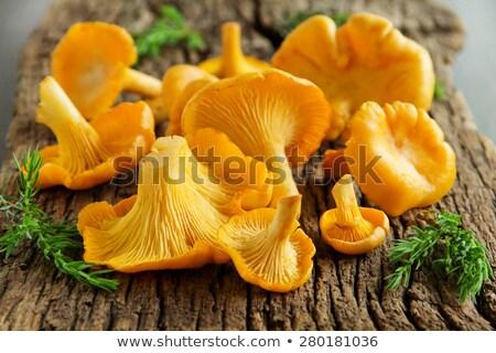 chanterelles on wooden background Stock photo © dolgachov