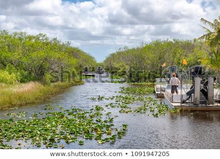 Флорида · растительность · воды · пейзаж · зеленый - Сток-фото © phbcz