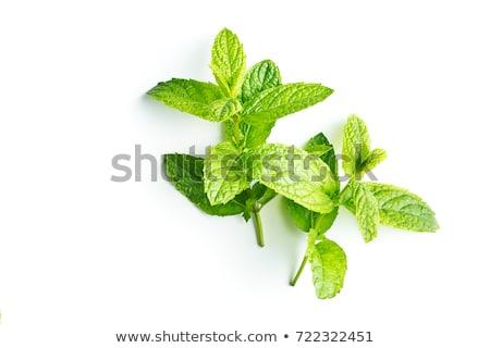 Mint on white background stock photo © Francesco83