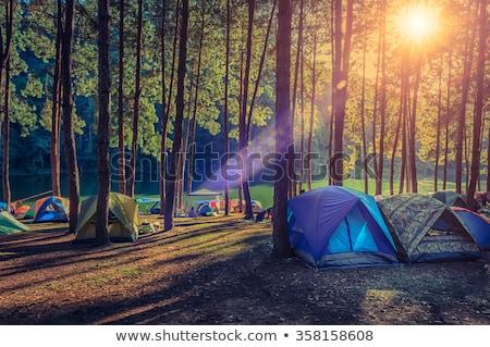 tenda · camping · mata · floresta - foto stock © mackflix