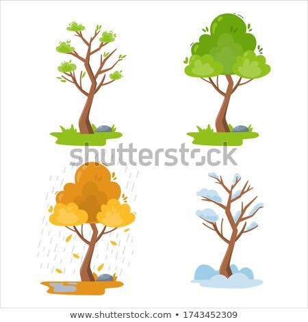 Establecer árboles diferente estaciones hierba hoja Foto stock © LoopAll