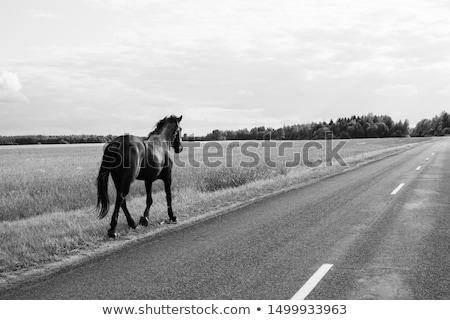 Egyedüli ló verseny üres útvonal Stock fotó © Sportlibrary