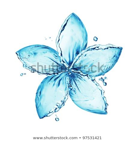 весенние цветы воды волны белый зеленый Сток-фото © vkraskouski