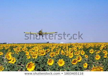 termény · mező · helikopter · kukoricamező · központi · Colorado - stock fotó © pictureguy