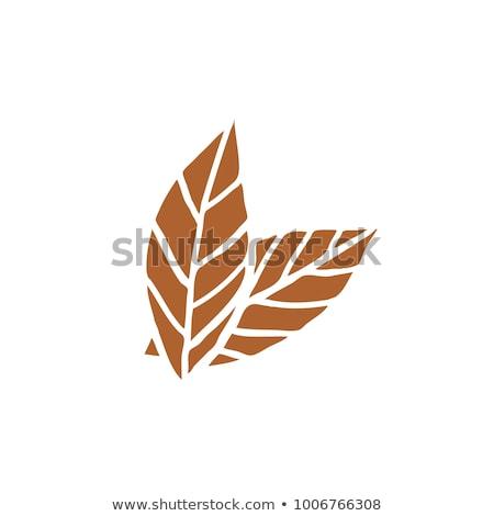 табак листьев высушите лист сельский Сток-фото © gorgev