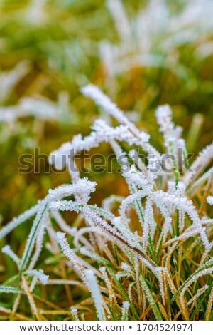 frozen spring Stock photo © taviphoto