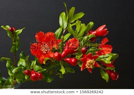 Granada árbol floración pequeño alimentos Foto stock © dinozzaver