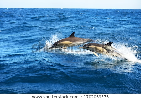 два дельфины Средиземное море морем синий небе Сток-фото © lunamarina
