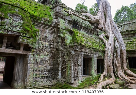 giant tree covering ta prom and angkor wat temple siem reap ca stock photo © weltreisendertj