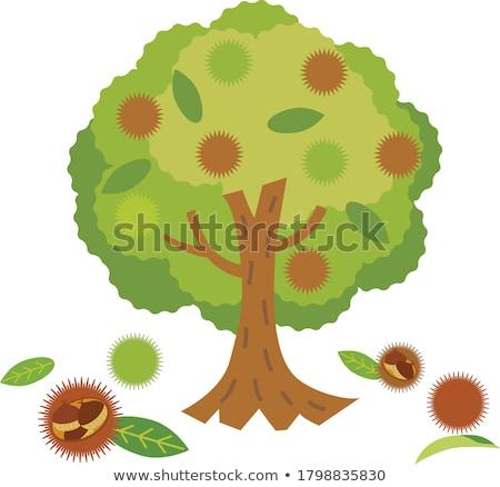 kestane · ağaç · yaprak · doğa · yaprakları - stok fotoğraf © LIstvan