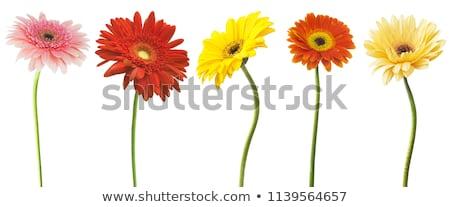 Belo laranja flor natureza beleza Foto stock © chris2766