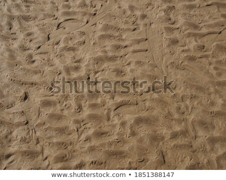 background of sand ripples at the beach with prints of birds f Stock photo © meinzahn