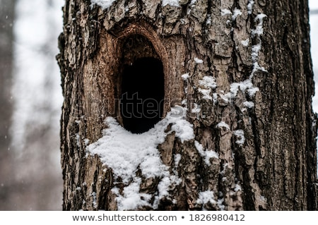 hollow tree stock photo © witthaya