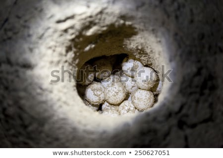 Stok fotoğraf: Sea Turtle Eggs On The Beach