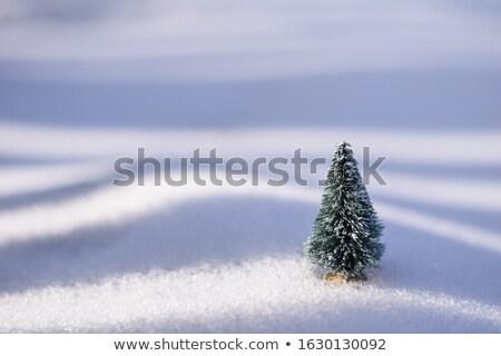 木 人工的な 常緑 クリスマス オレンジ ストックフォト © fotogal