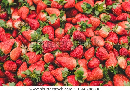 many ripe strawberries close-up  Stock photo © OleksandrO
