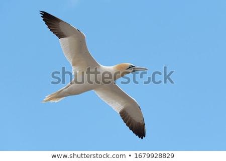 край утес трава птица белый животного Сток-фото © chris2766