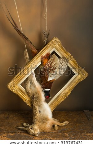 pheasants still life Stock photo © phbcz