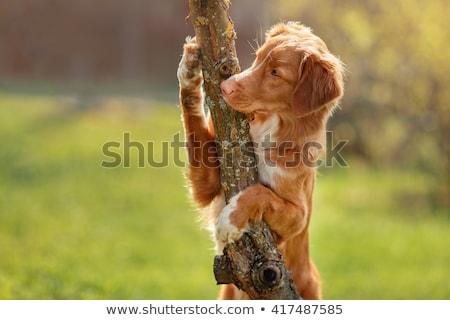 犬 ツリー ブロンド 座って 浅い ストックフォト © EvgenyBashta