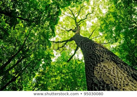 Luce del sole rami foglie albero primavera Foto d'archivio © morrbyte
