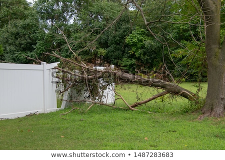 Tree fell on house. Home insurance Stock photo © orensila