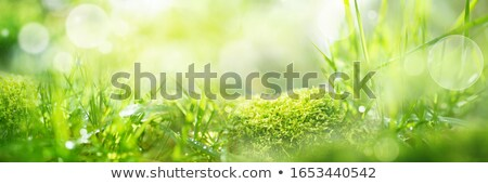 Clean and green environment Stock photo © bluering