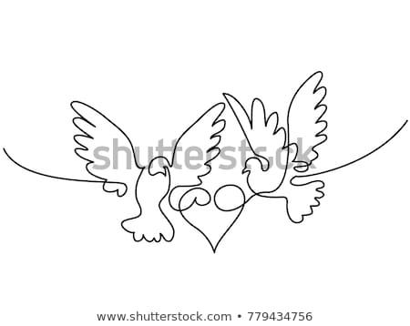 pigeons and heart stock photo © denisnata