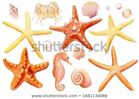 Zee zeester illustratie helling witte Stockfoto © ConceptCafe