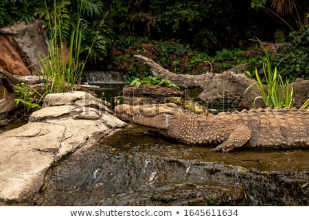 Crocodilo escultura água lagoa nuvem Foto stock © bezikus