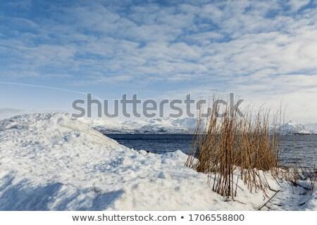 青 海景 冬 日 表示 ストックフォト © stevanovicigor