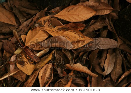 Dead leaves on twig Stock photo © Tawng