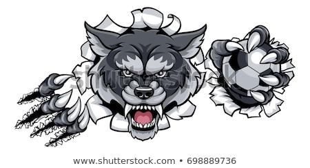 Lobo futebol mascote zangado animal esportes Foto stock © Krisdog