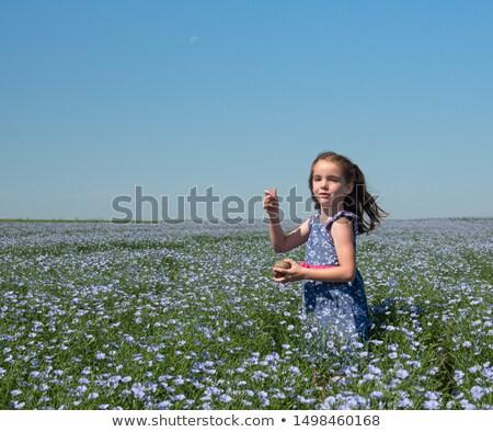 Alan çiçekli gökyüzü mavi gökyüzü bahar çim Stok fotoğraf © alinamd