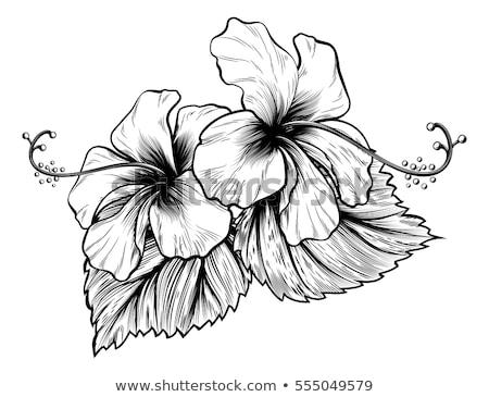 Hibiscus Flowers Vintage Woodcut Etching Engraving Stock photo © Krisdog