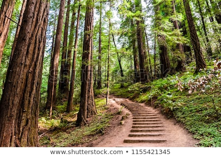 Bosques pequeño arroyo San Francisco California EUA Foto stock © dirkr