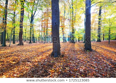 autumn beech forest leaves yellow red golden floor stock photo © lunamarina