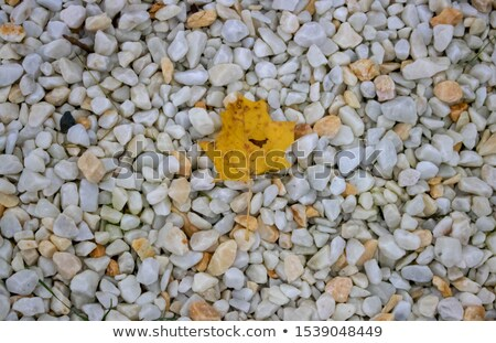 Autumn leaves are coming on solid yellow orange backgroun Stock photo © wenani