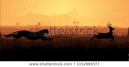 A cheetah hunting deer Stock photo © bluering