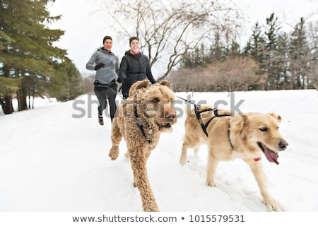 canicross woman group sled dogs pulling in winter season stock photo © lopolo